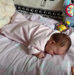 Detail of photo of sleeping Asta.