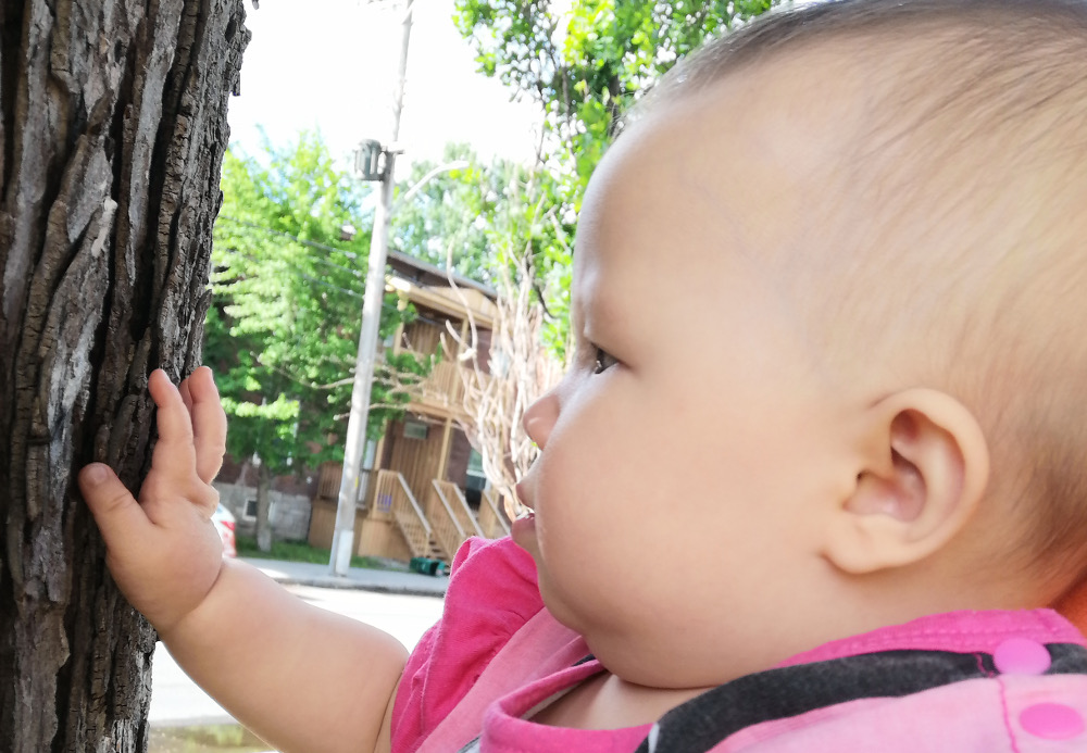 Photo of baby Baobao looking at, and touching, the bark of an old tree.