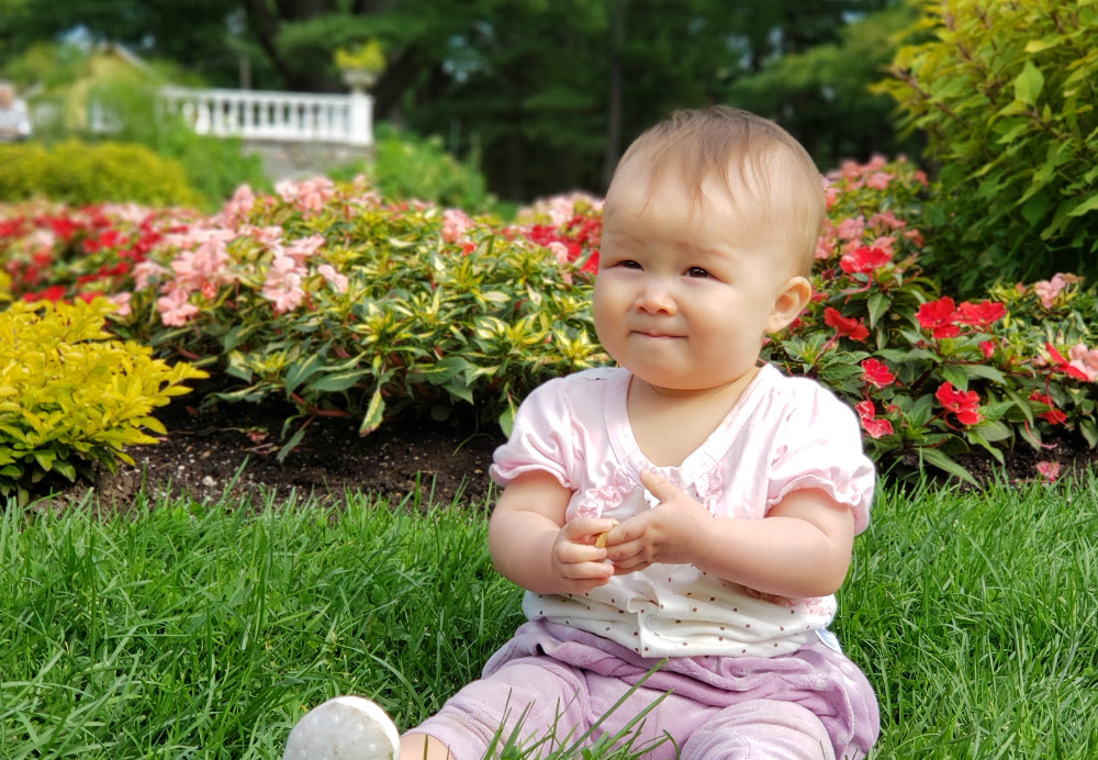 Close-up photo of baby Baobao sitting in front of the gardens of the William Lyon Mackenzie King Estate at Gatineau Park.