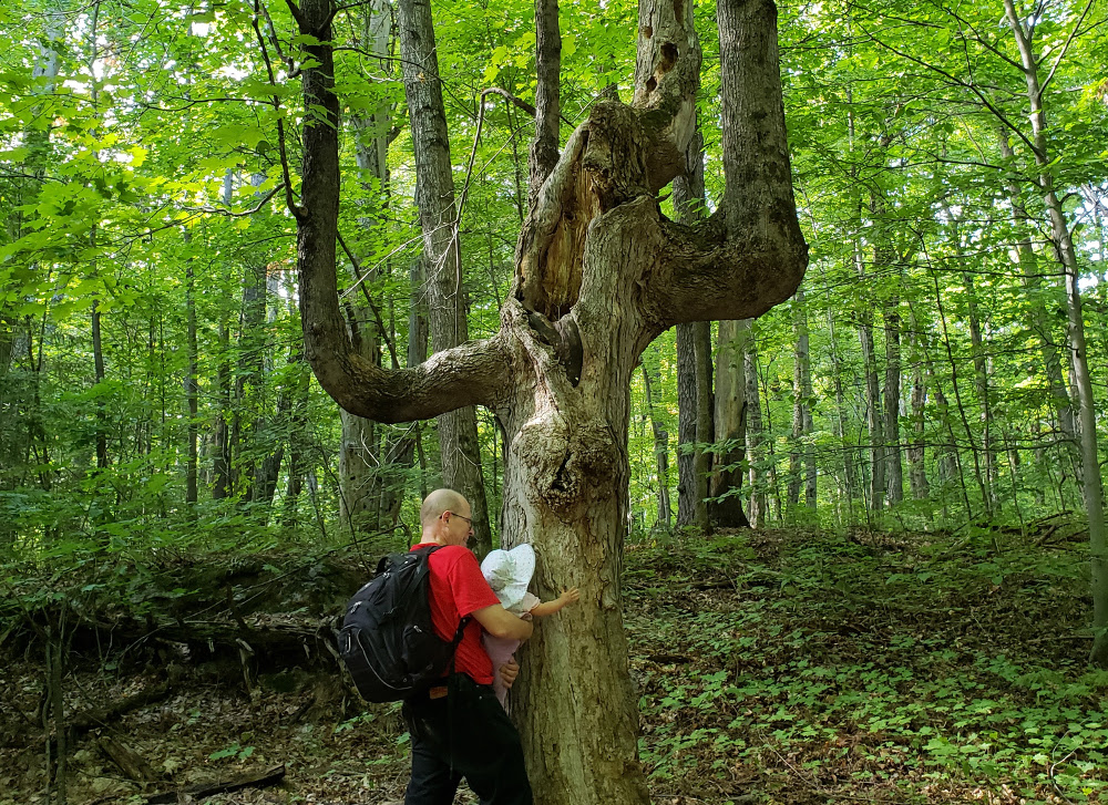 Photo of Papa Zesser holding baby Baobao so that she can touch teh bark of a gnarled old tree in Gatineau Park.