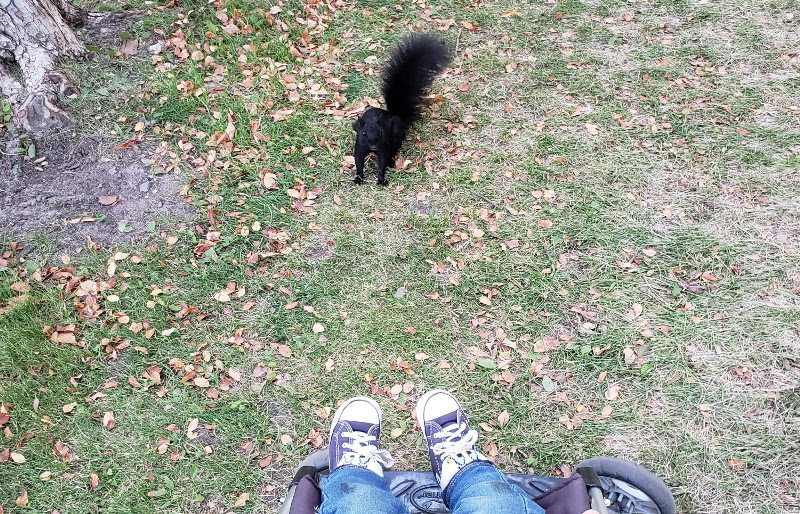 Detail of photo of squirrel threatening baby Baobao in a local park. (Only Baobao's feet are visible.)
